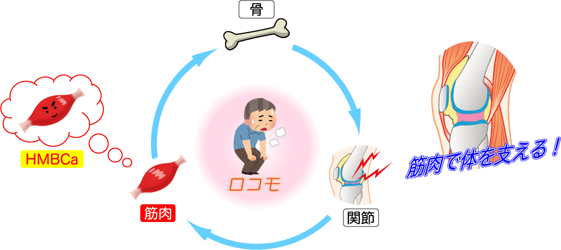 HP_DATA_HMB5